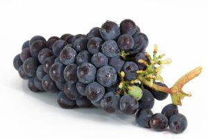 Bunt med blå druer
