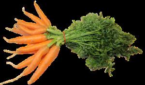 En bunt med gulrøtter